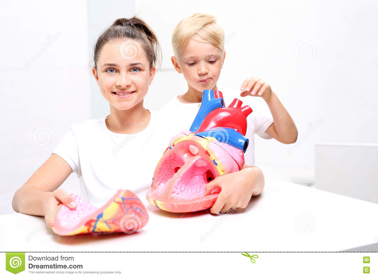 Educationnstruction Of The Heart Stock Image Image Of Human