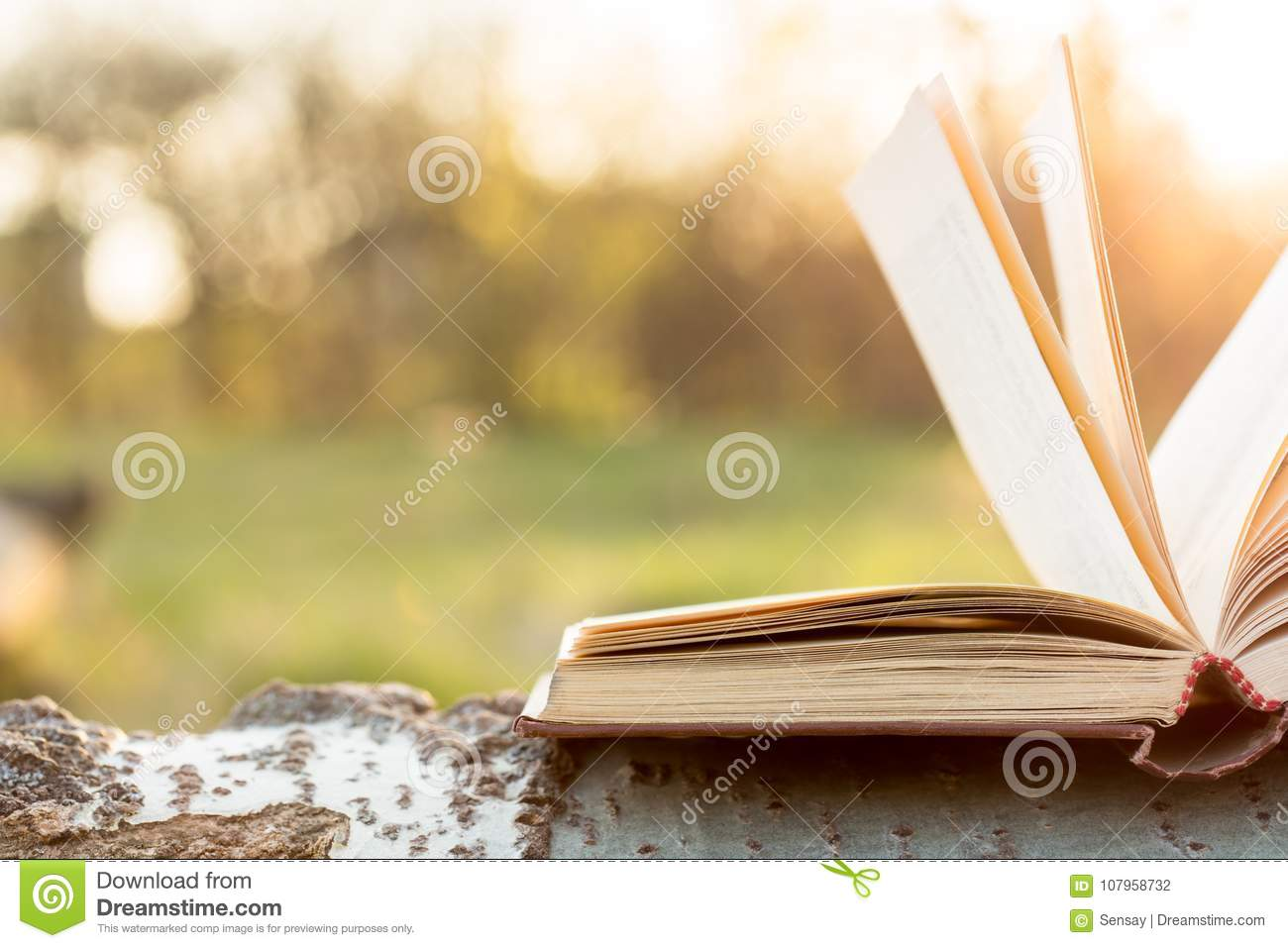 Education and wisdom concept - open book under sunlight