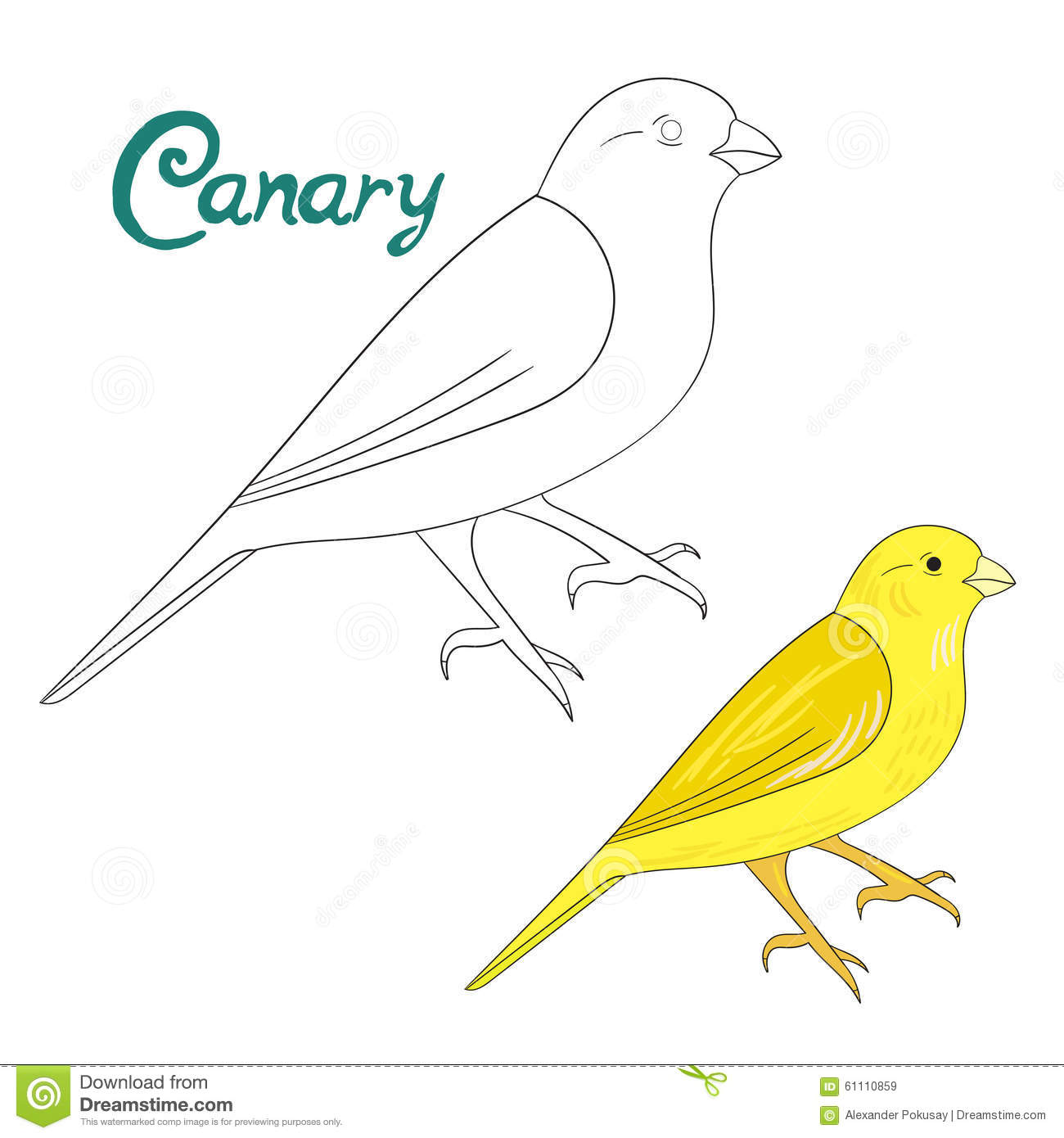 canary bird coloring pages - photo#41