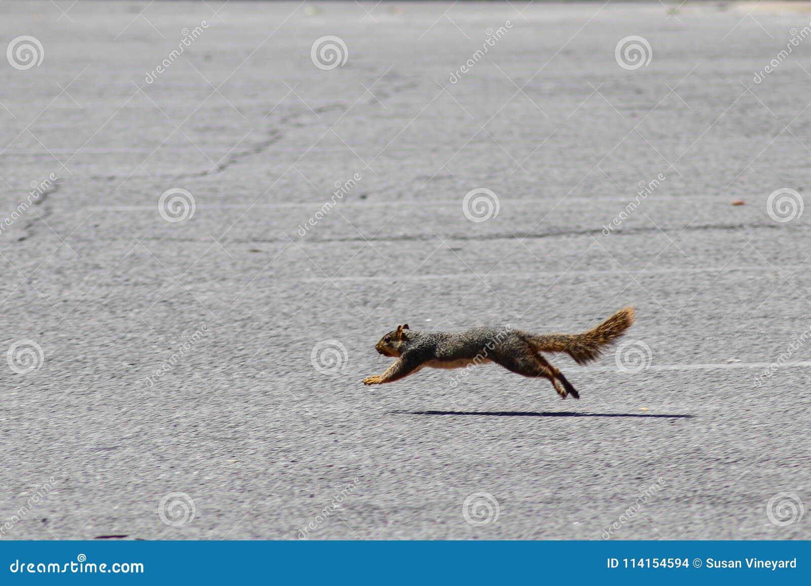 Eekhoorn die in beweging - in een sprong van de grond lopen en wordt gevangen