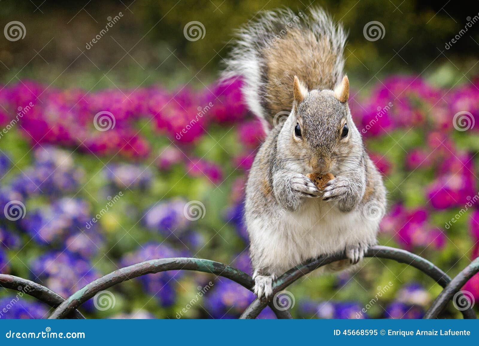 Tuinbank Hyde Park.Eekhoorn Die Koekjes Eten Stock Afbeelding Afbeelding Bestaande Uit