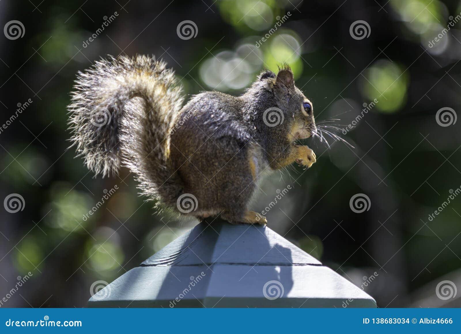 Eekhoorn op Post