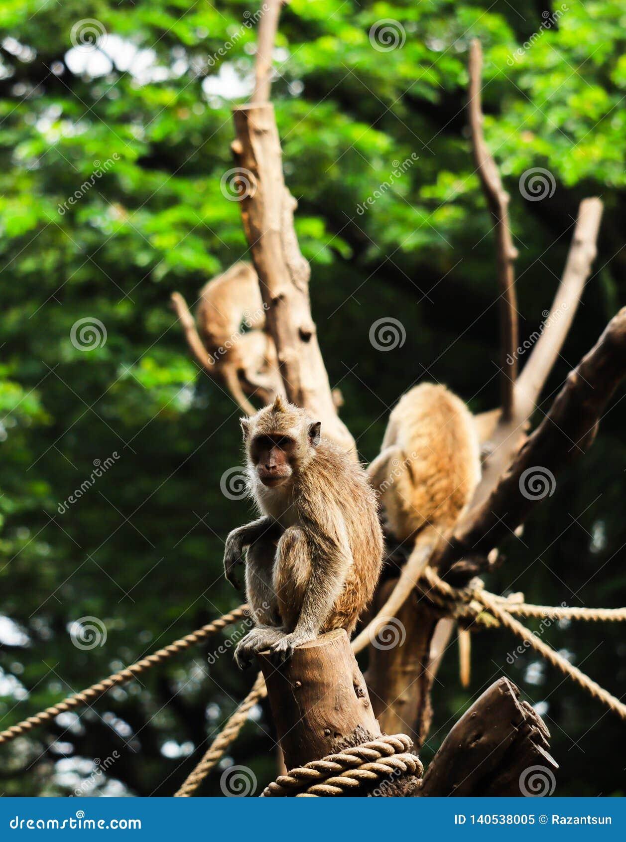 Een aap bekeek de camera