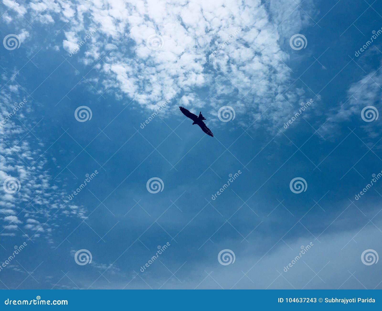 Download Een Adelaar Die Op Een Achtergrond Van Duidelijke Blauwe Hemel Hangen Stock Afbeelding - Afbeelding bestaande uit achtergrond, hovering: 104637243