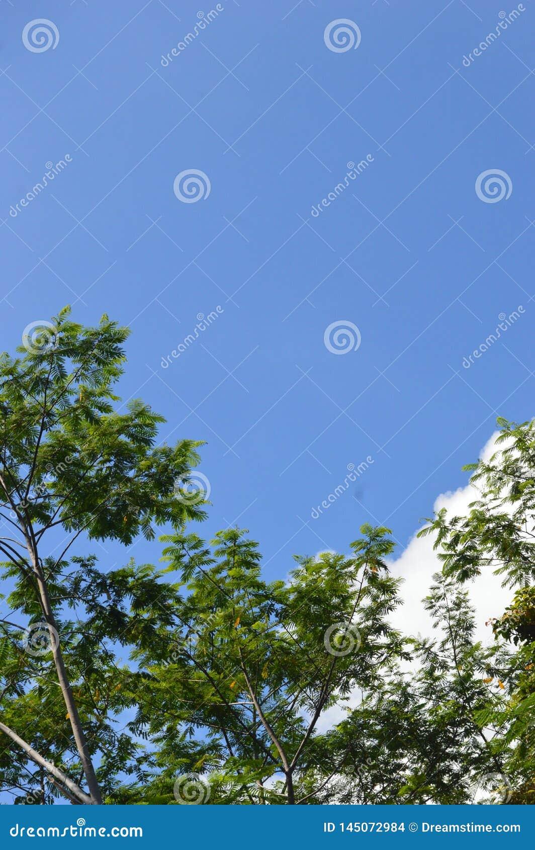 Een beeld van een boom die aan de hemel uittorende