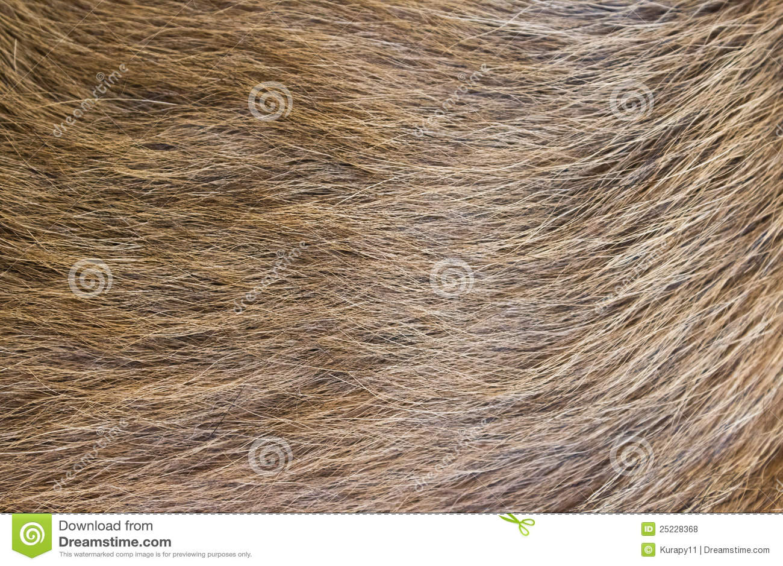 Een beige hondbont.