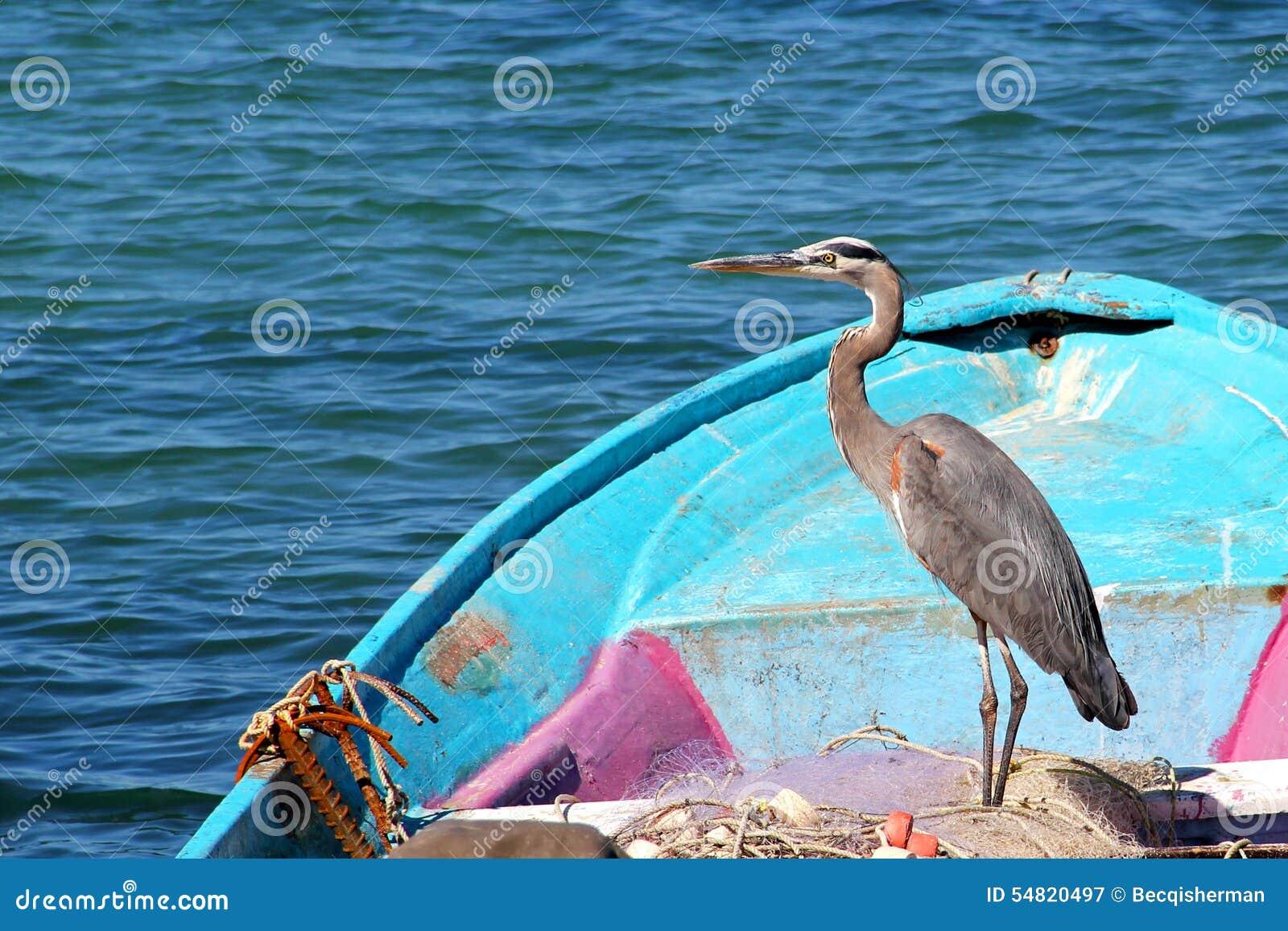 Een bevallige zeevogelreiger rust in een blauwe vissersboot met visnetten op Overzees van Cortez in Mexico
