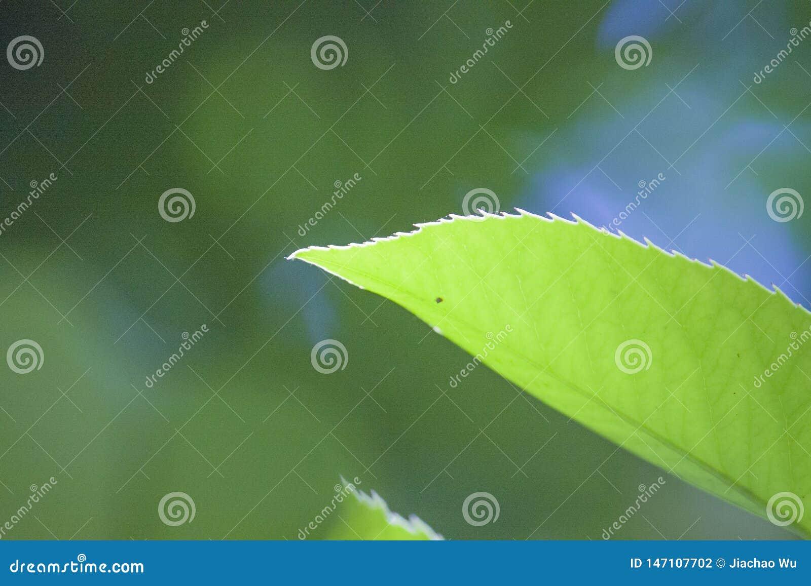 Een blad met tedere groene bladeren verlaat een installatiebloem