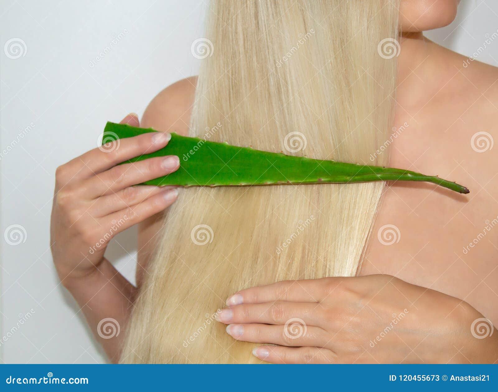 Een blondevrouw paste aloë Vera op haar haar toe Natuurlijke schoonheidsmiddelen voor haar