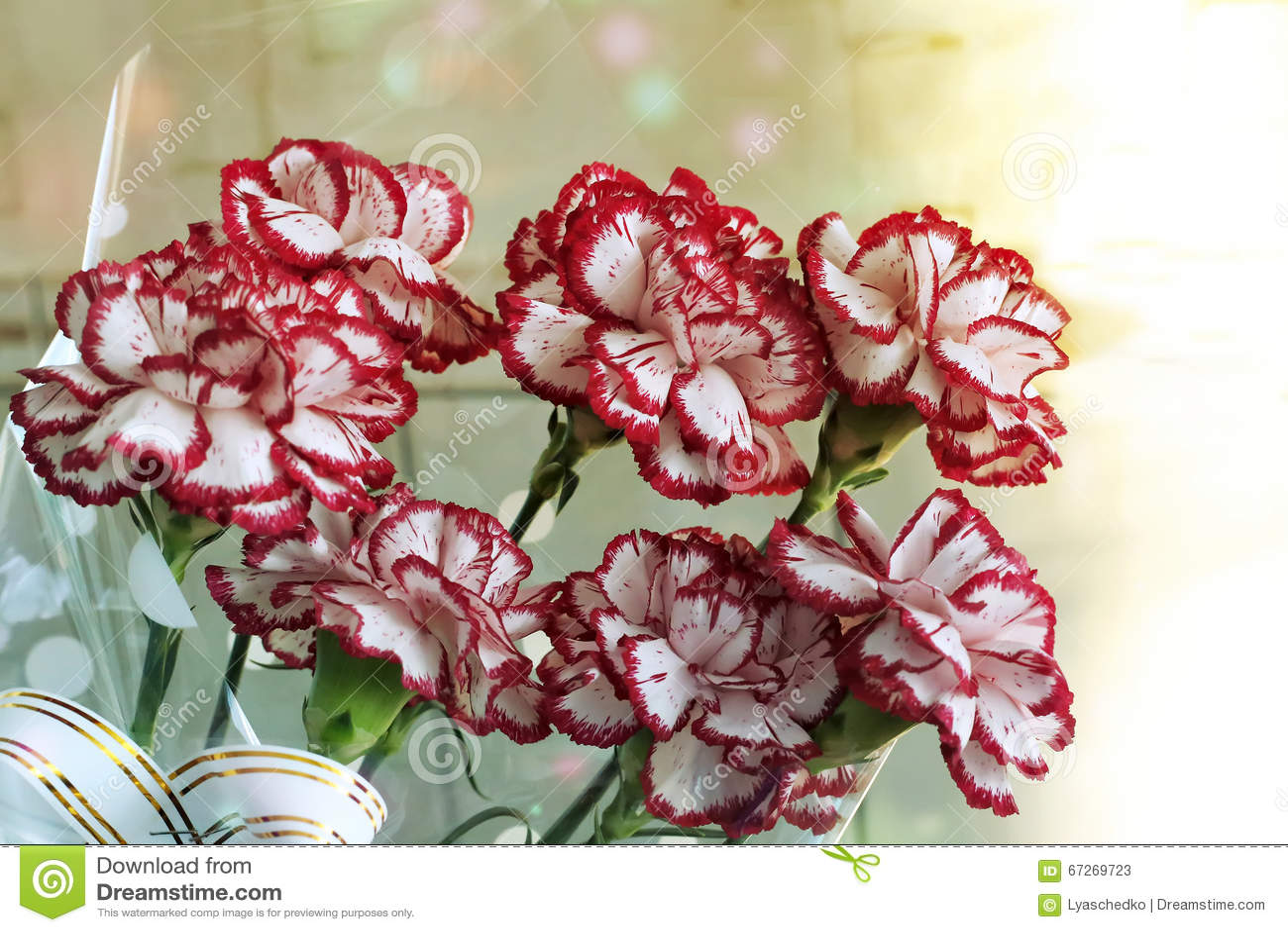 Een boeket van rode en witte anjers stock foto   afbeelding: 67269723