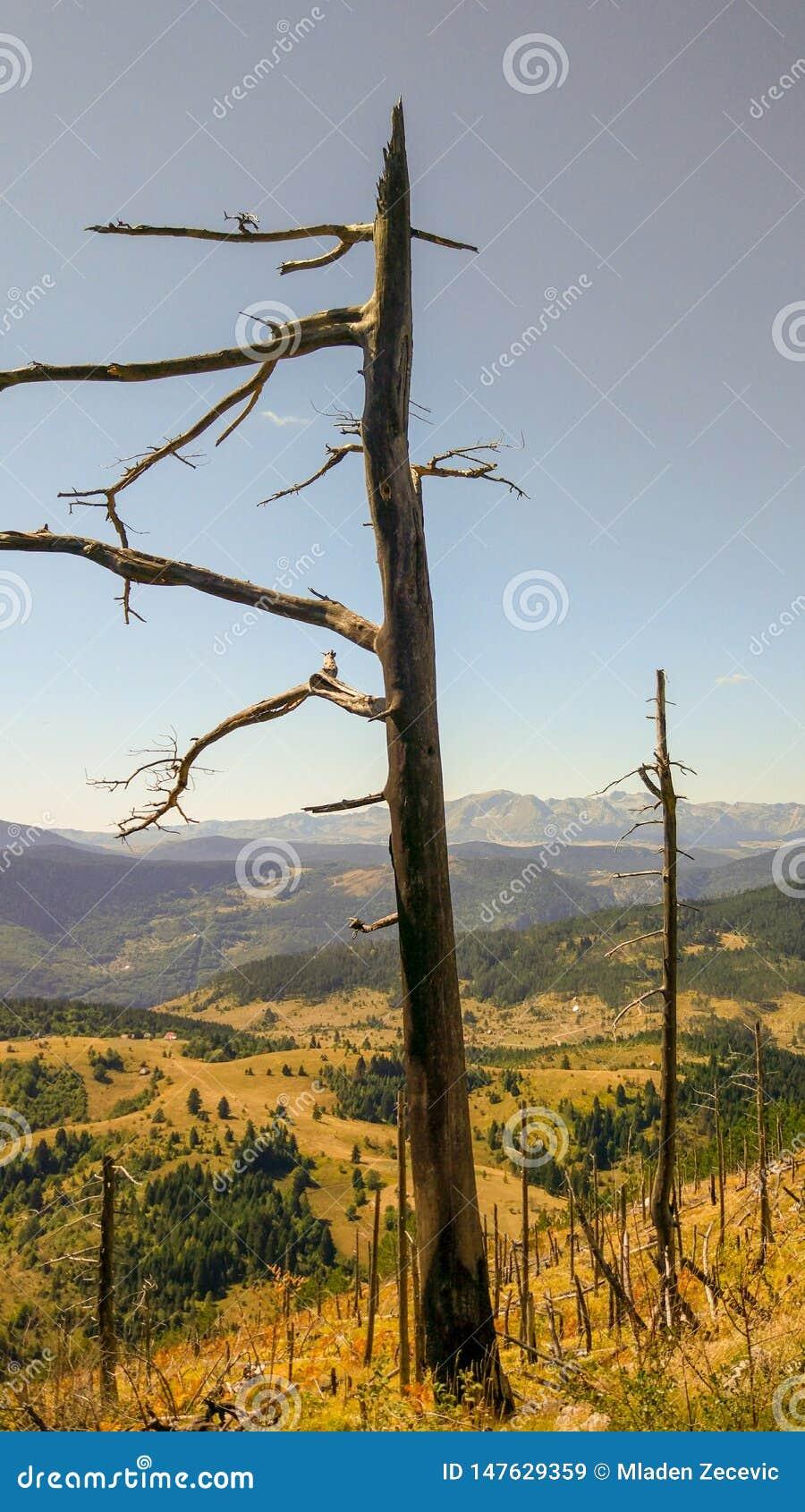 Een boom door wildfire wordt gebrand die
