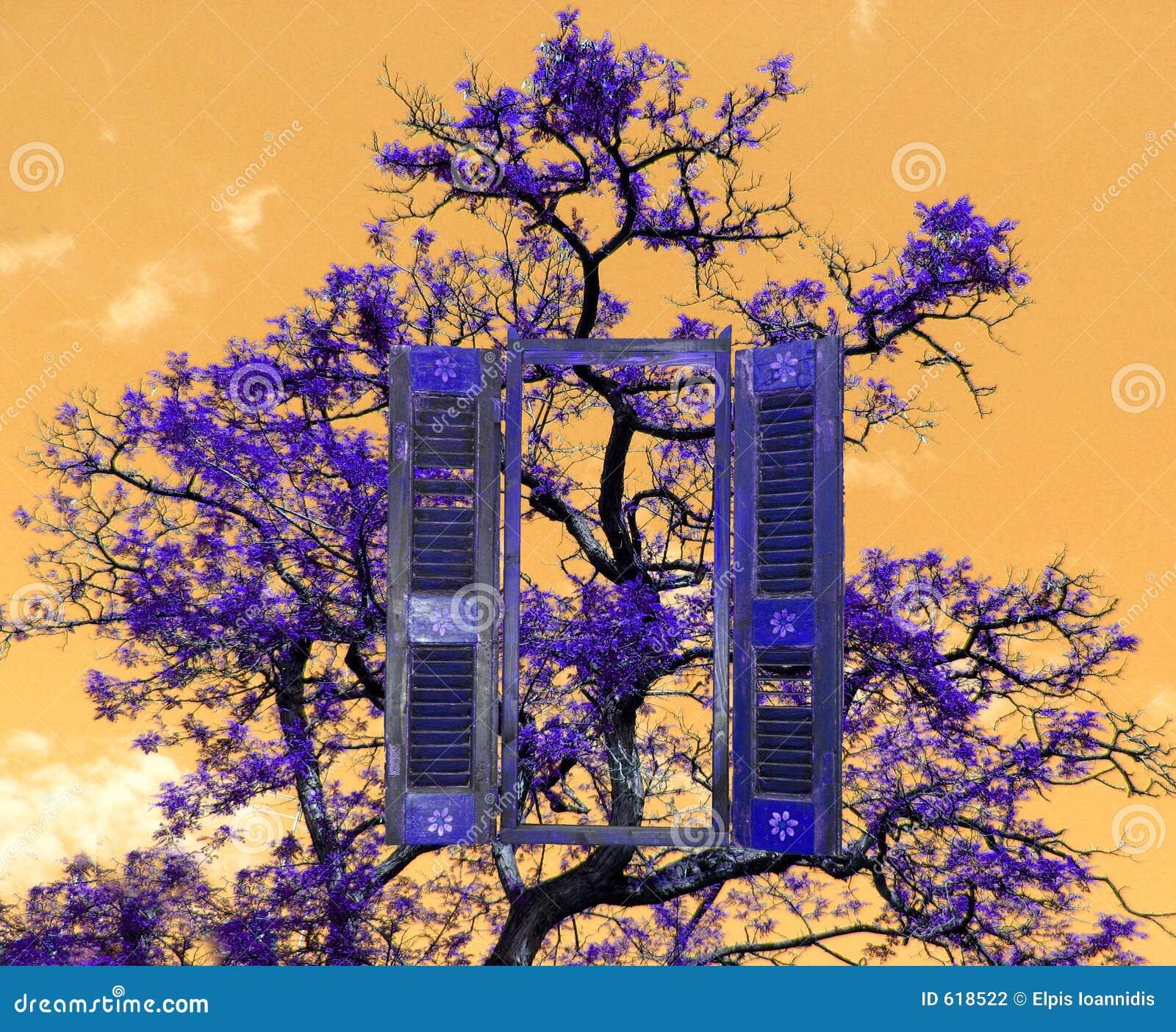 Een boom en een venster,