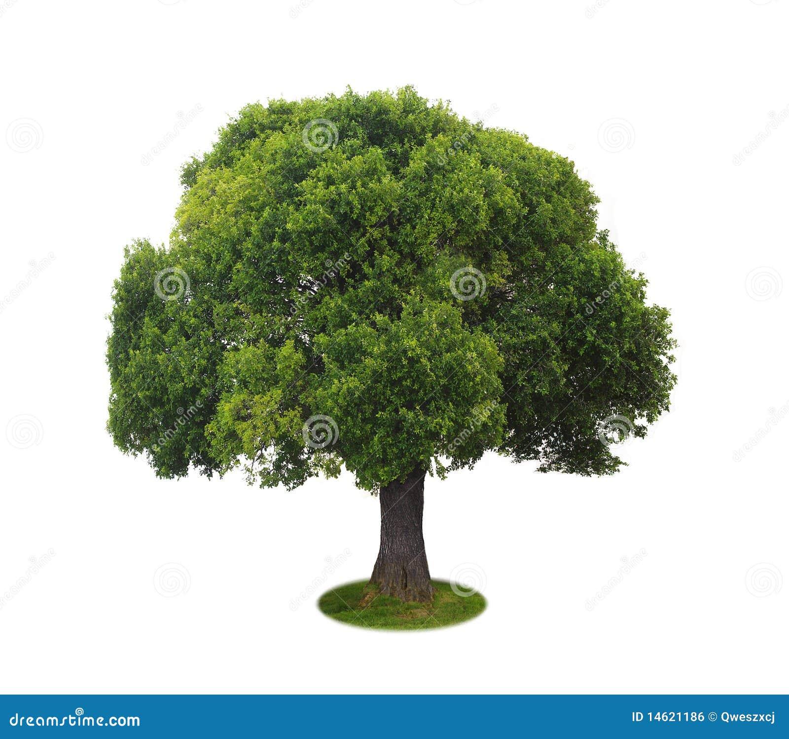 een boom