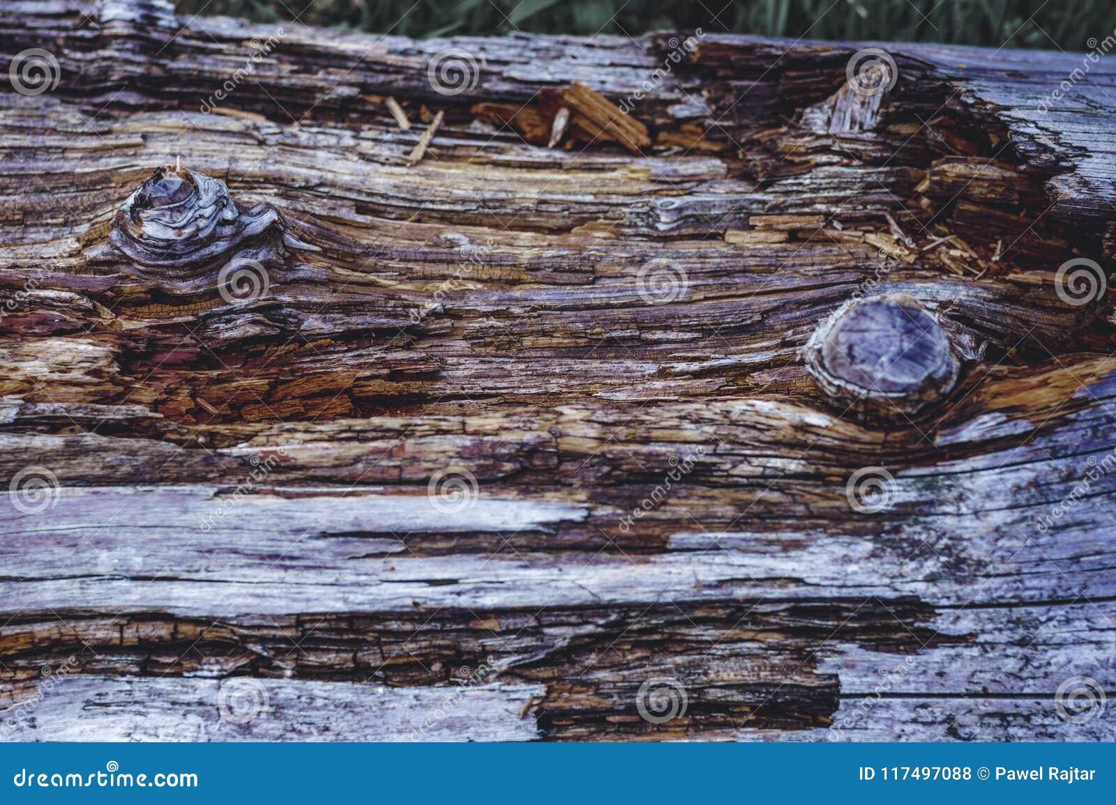 Een boomstam in het bos, een rest van een oude boom Mooie houten textuur met sterke contrasten en kleuren