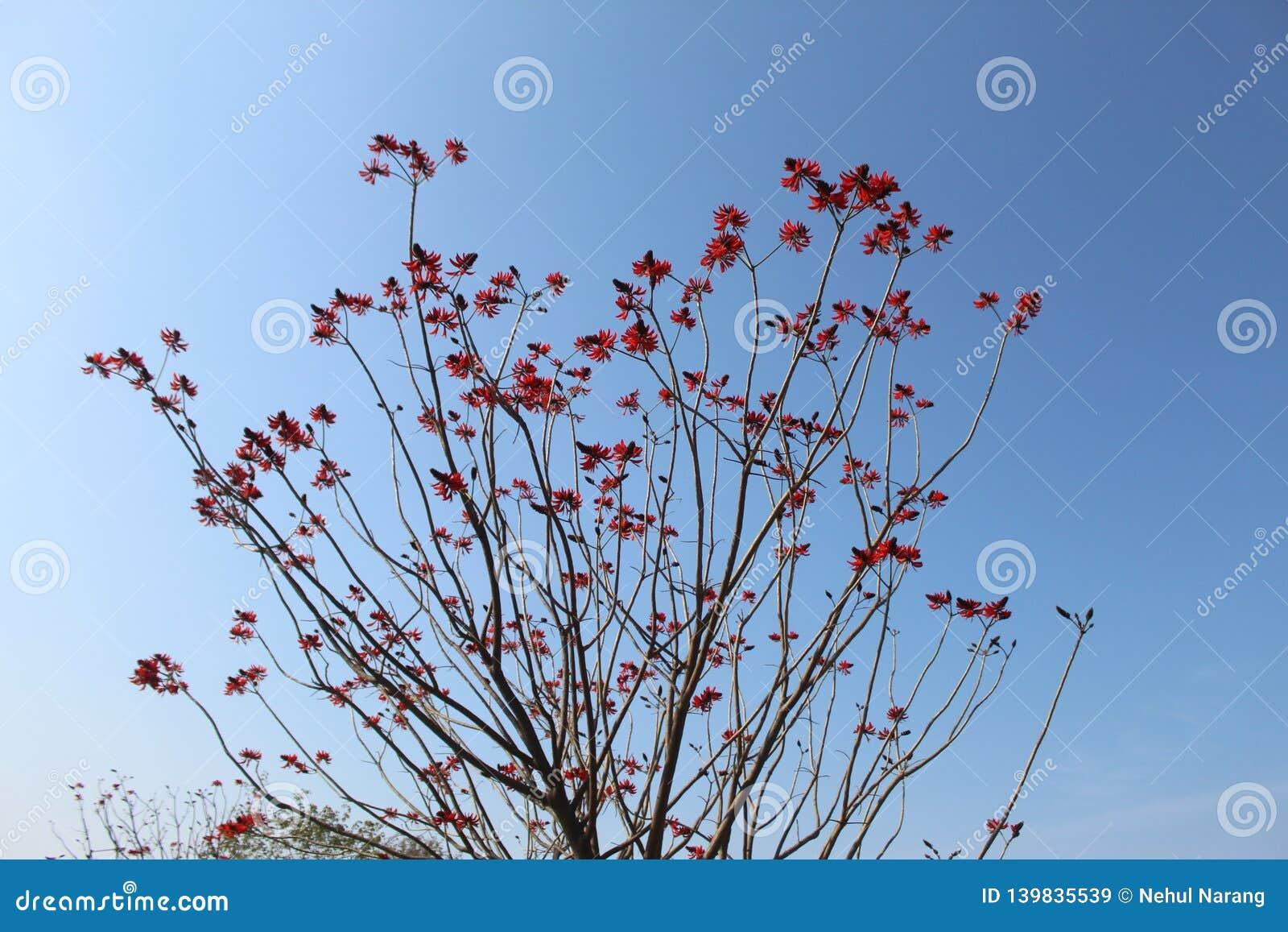 Een bos van unieke rode bloemen die op een boom hangen