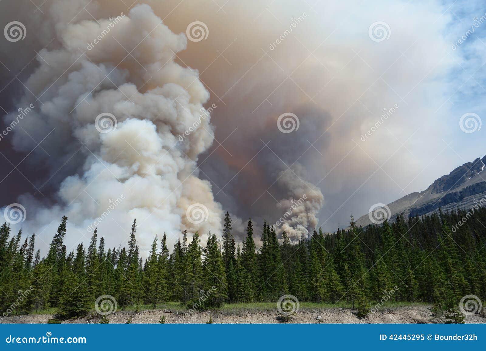 Een bosbrand in een nationaal park