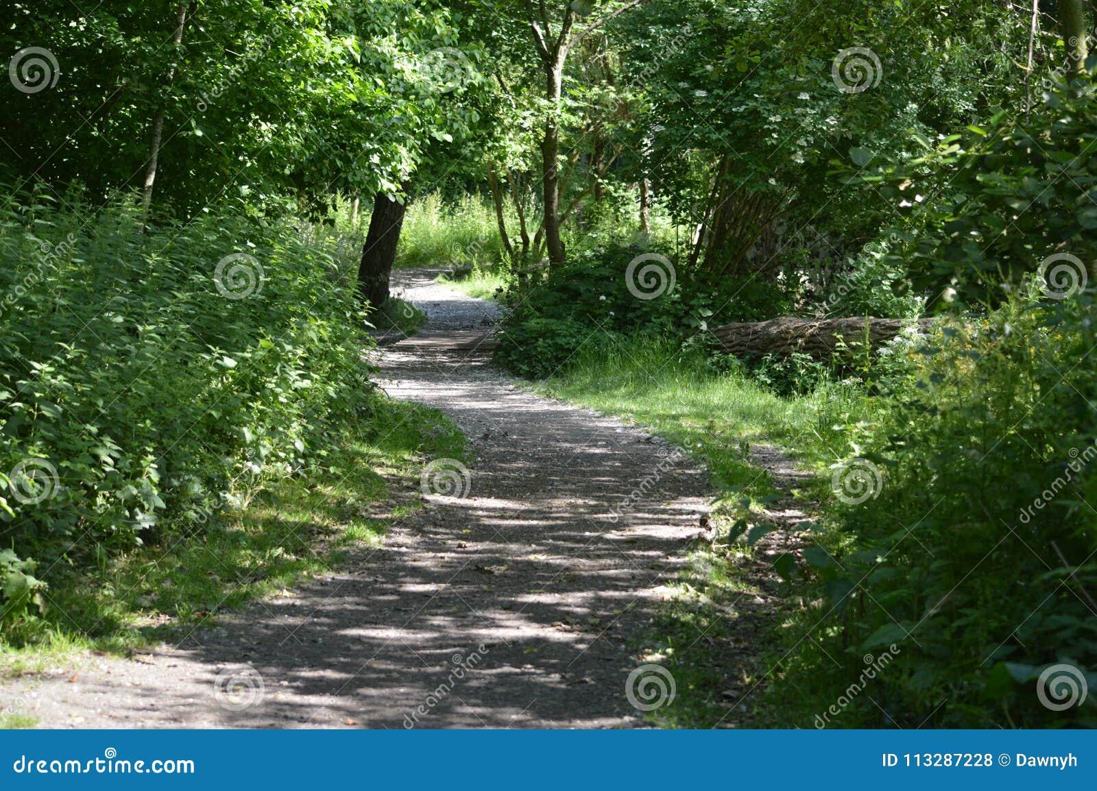 Een bosweg in het UK