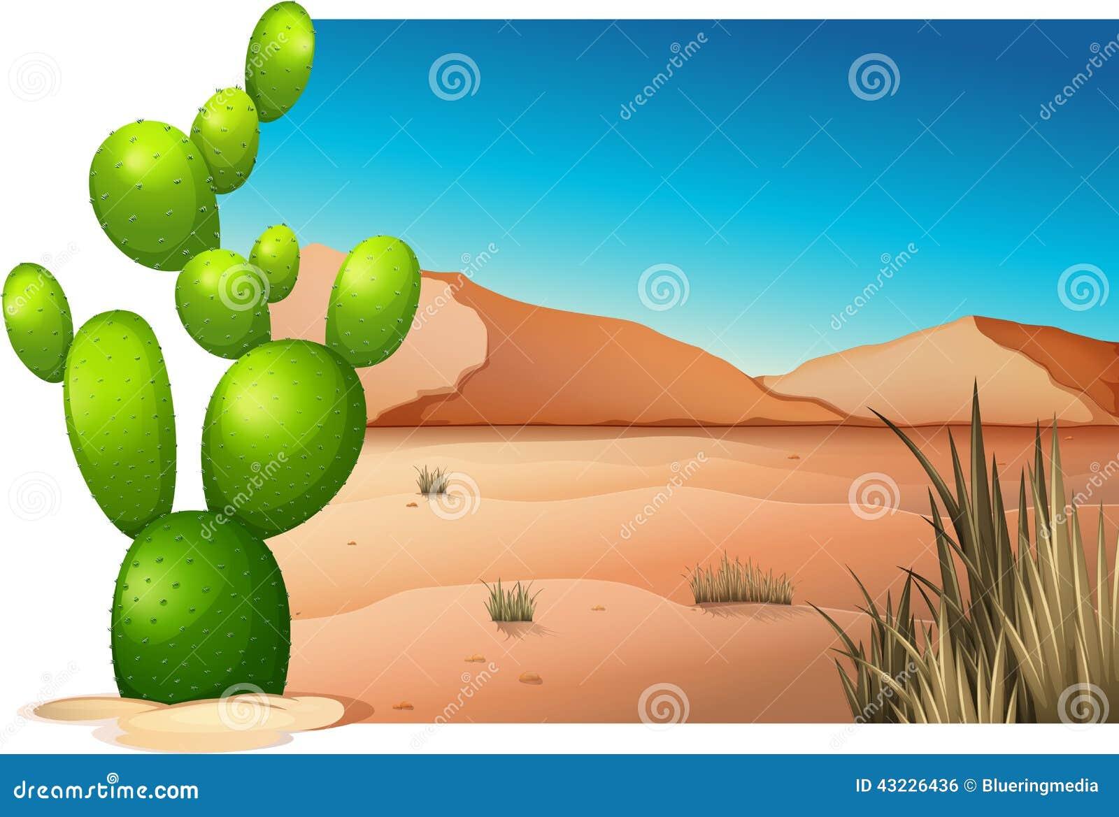 Een cactus bij de woestijn