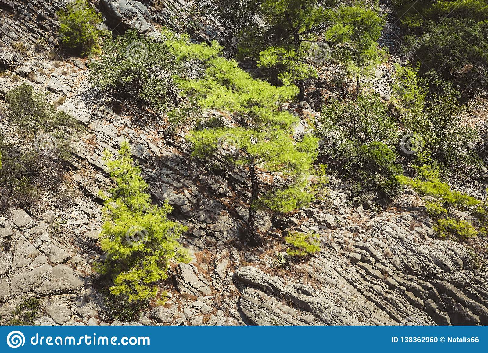 Een close-updeel die van gelaagde berghelling en groene bomen op het groeien