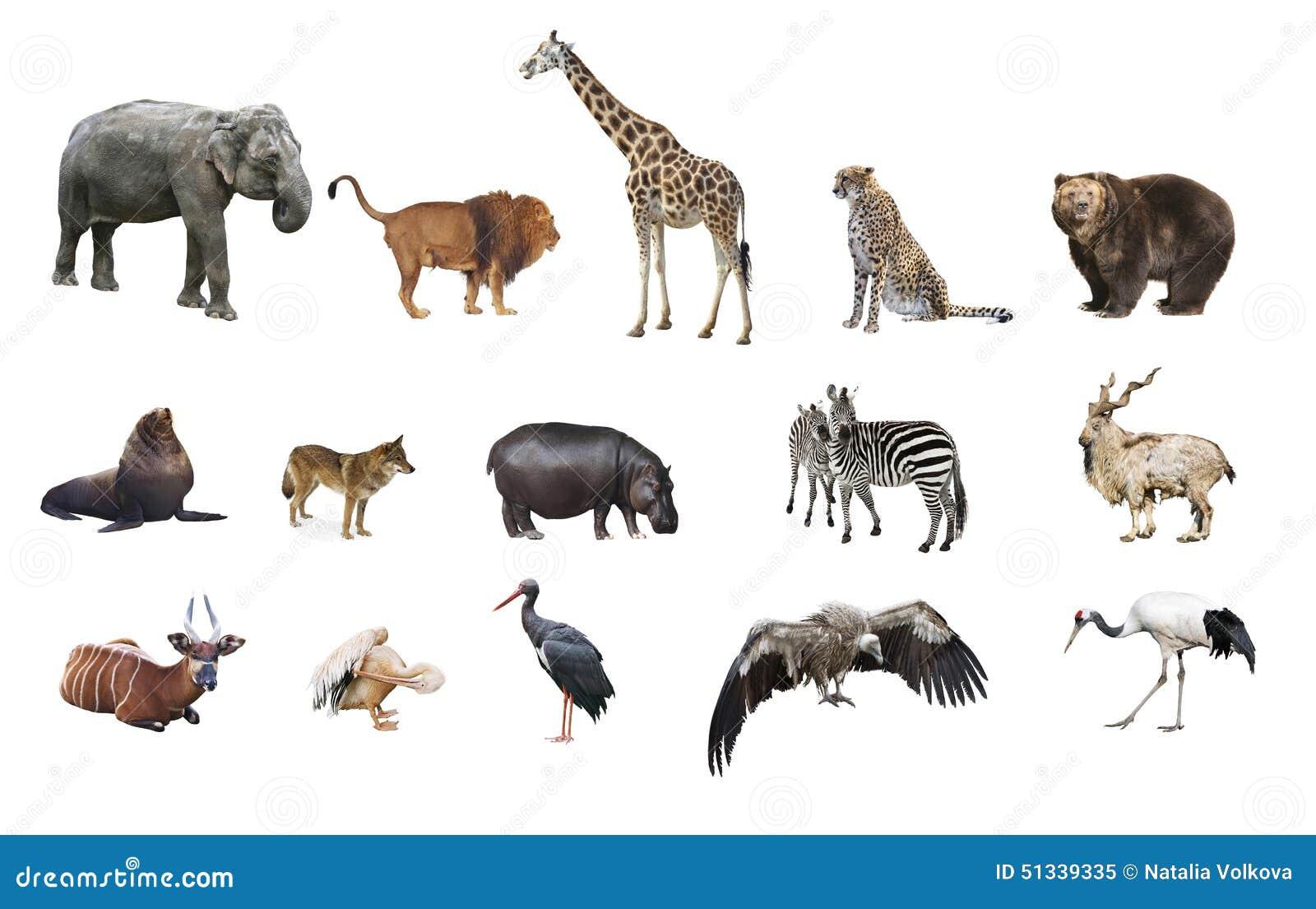 Een collage van wilde dieren