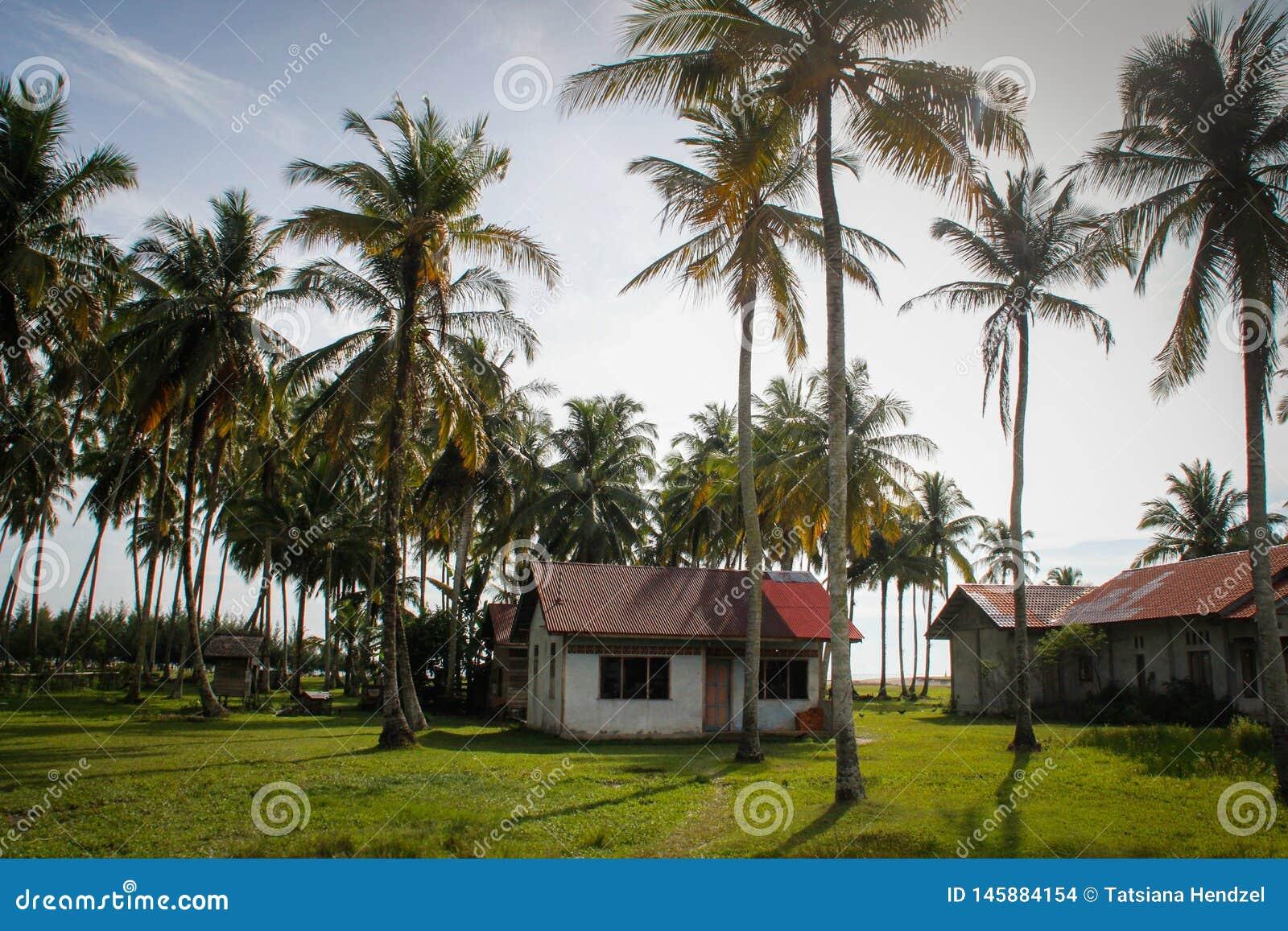 Een comfortabel buitenhuis en heel wat kokospalmen dichtbij de oceaan Indonesië, Sumatra