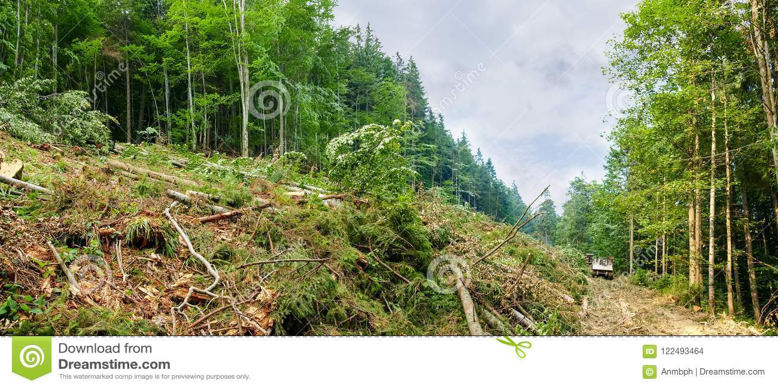 Een deel van een berghelling tijdens verminderde bomen