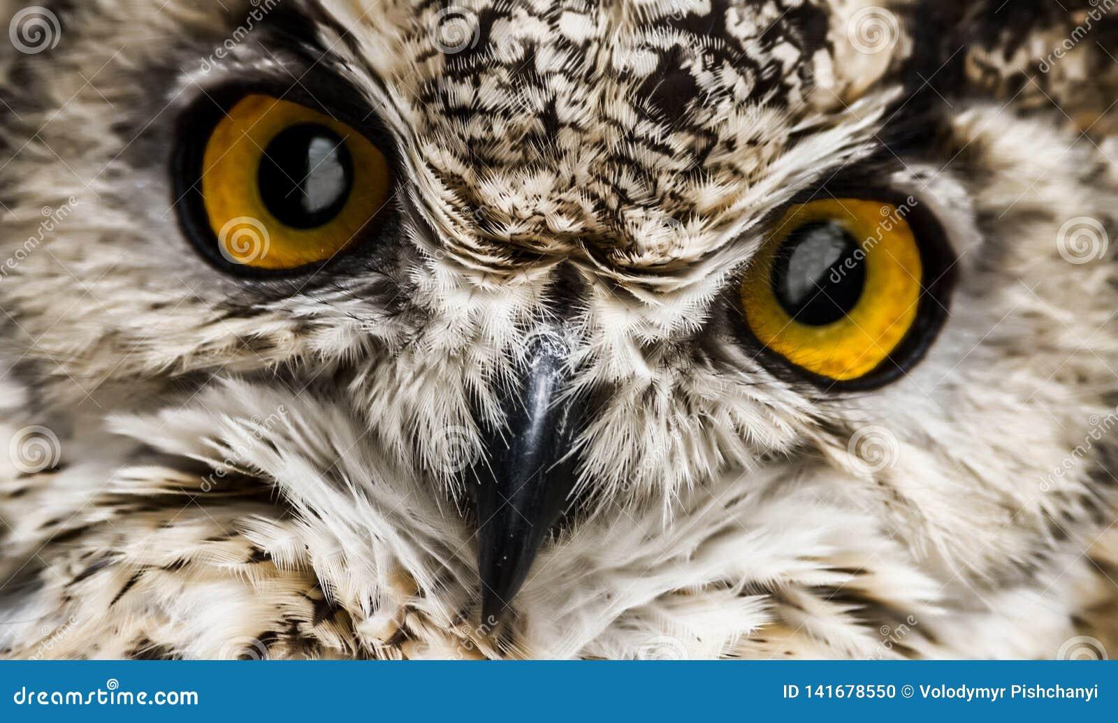 Een dichte blik van de bek en de oranje ogen van een uil