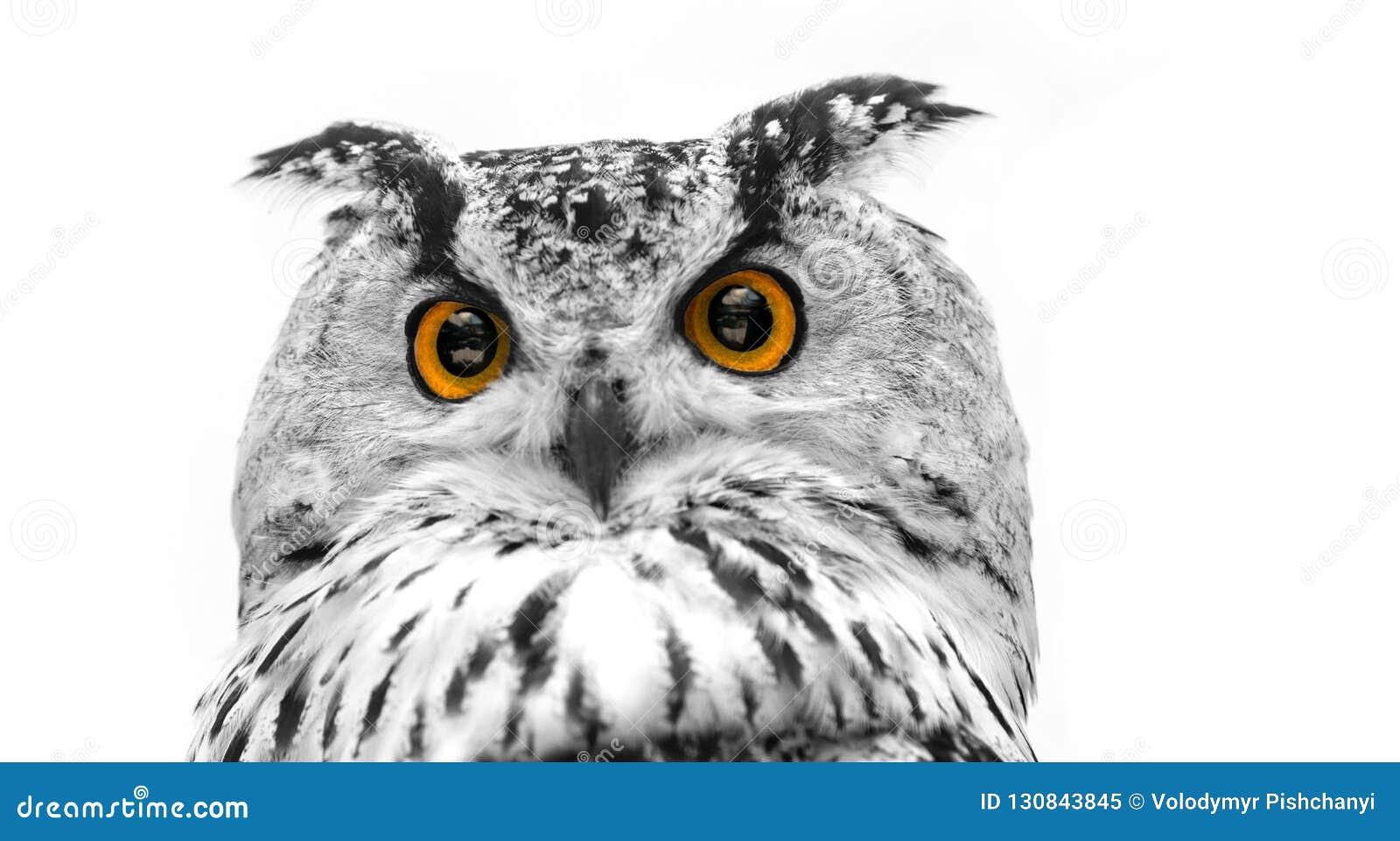 Een dichte blik van de oranje ogen van een gehoornde uil op een witte achtergrond