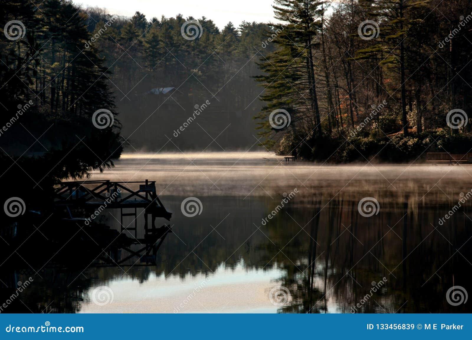 Een dok denkt in kalm meerwater na in een nevelige zonsopgang in Westelijk