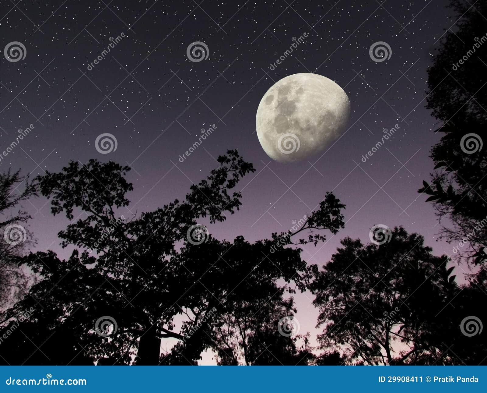 Hemel van de de sterren de donkere bosnacht van de maan