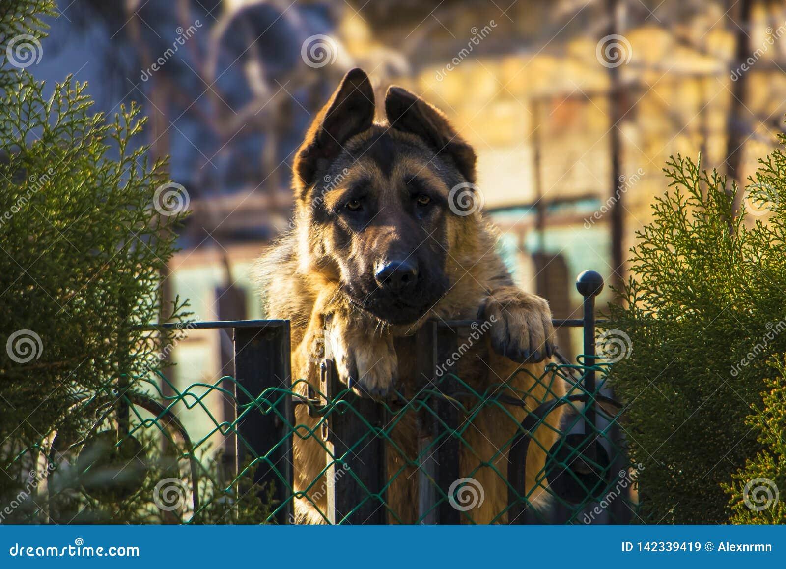 Een droevige hond wacht op zijn meester