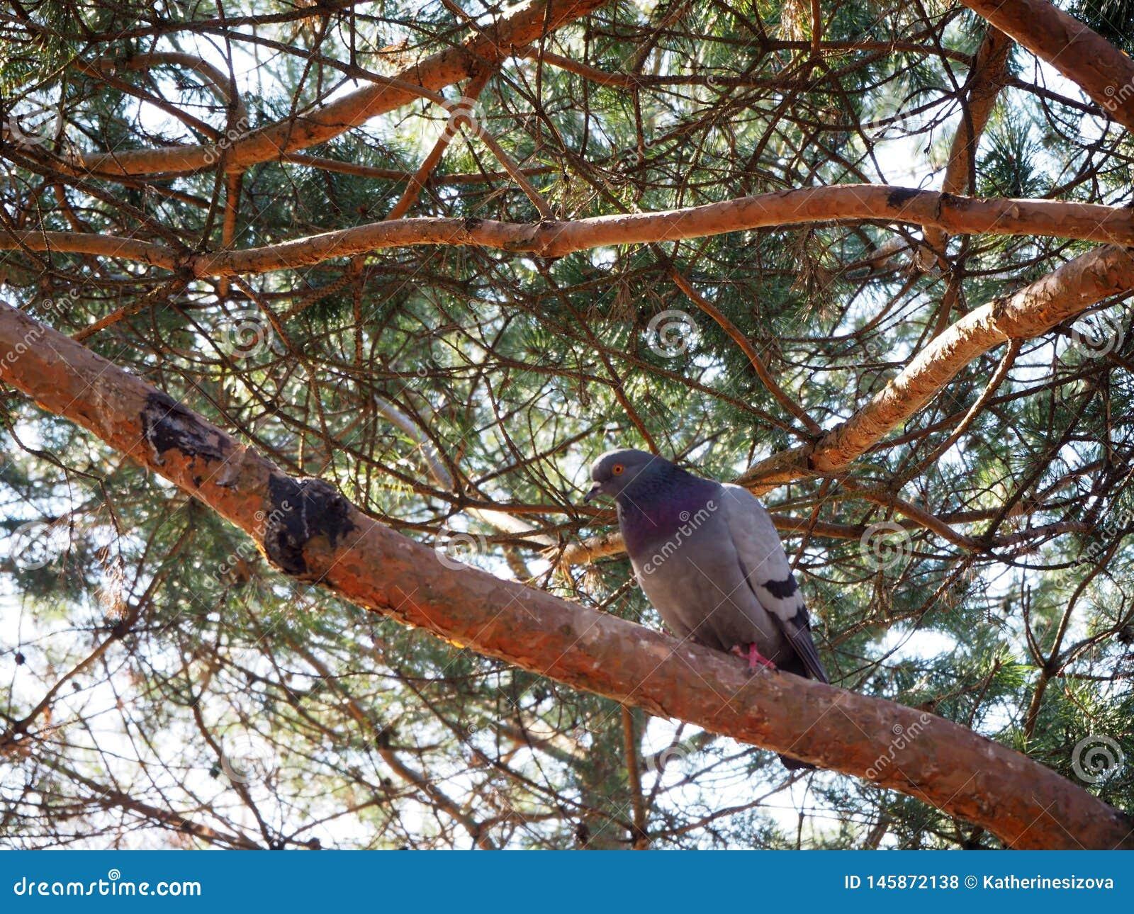 Een duif zit op een boomtak