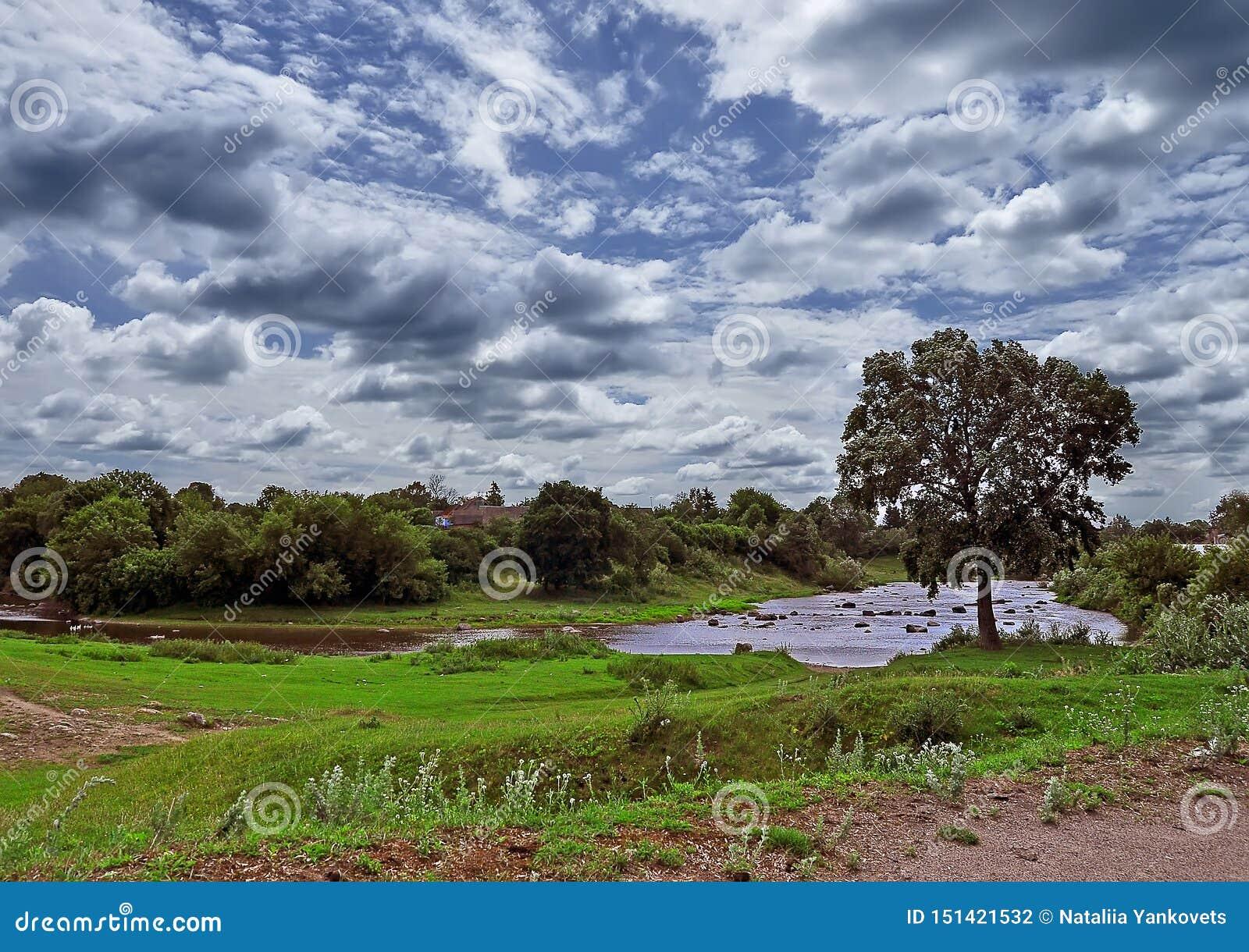 Een eenzame boom groeit op de rivierbank tegen een blauwe hemel met witte wolken