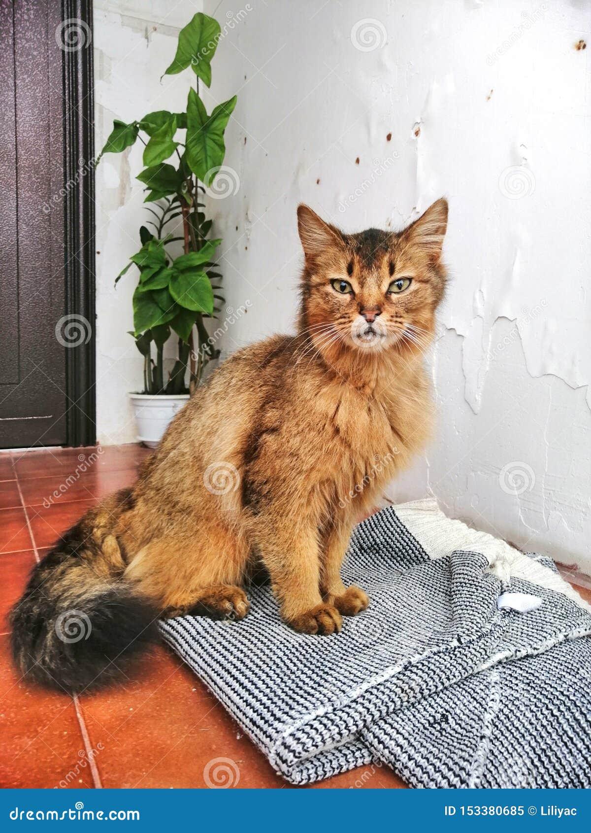 Een eenzame rode kat op de drempel