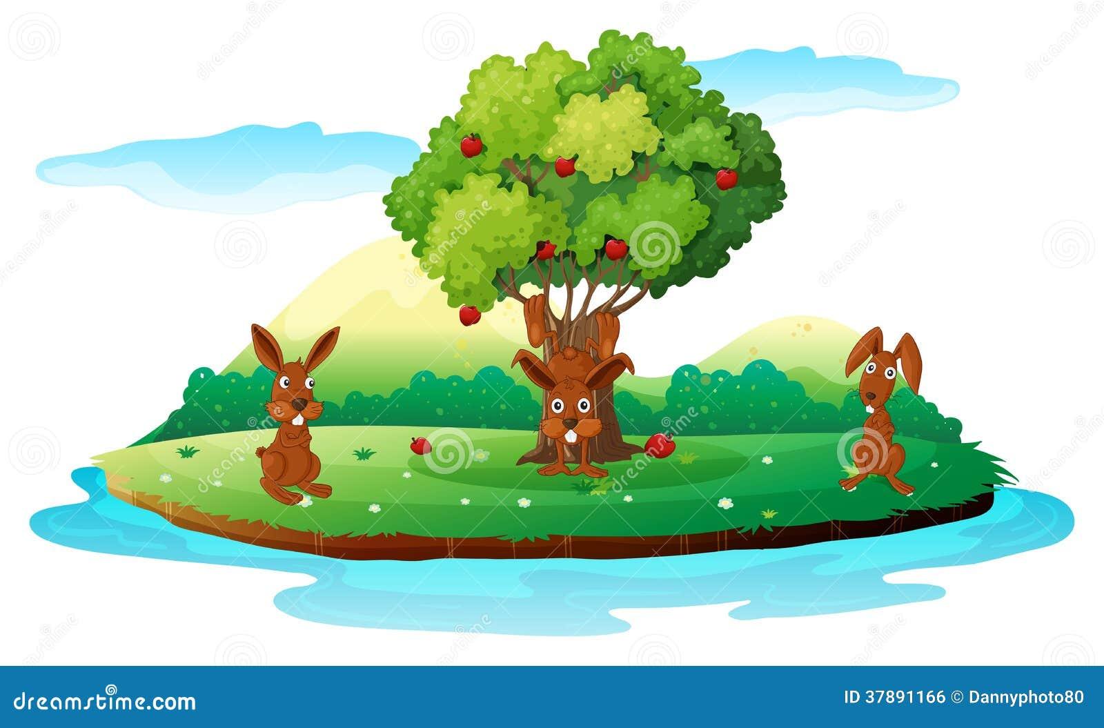 Een eiland met drie speelse konijnen
