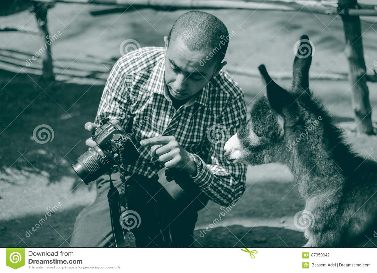 Een ezel die zijn foto controleren