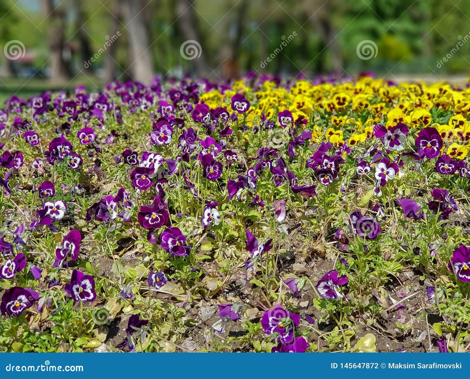 Een foto van kleurrijke bloemen in bokeh