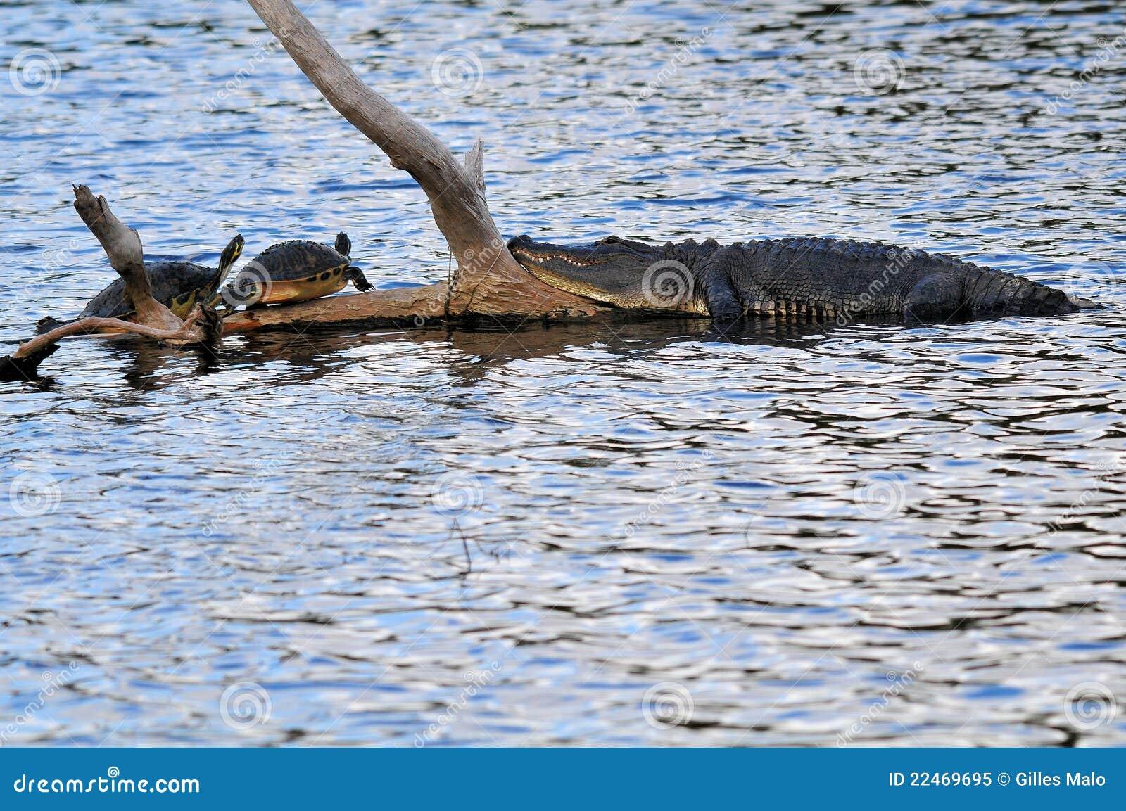 Een Gator & Twee Schildpadden