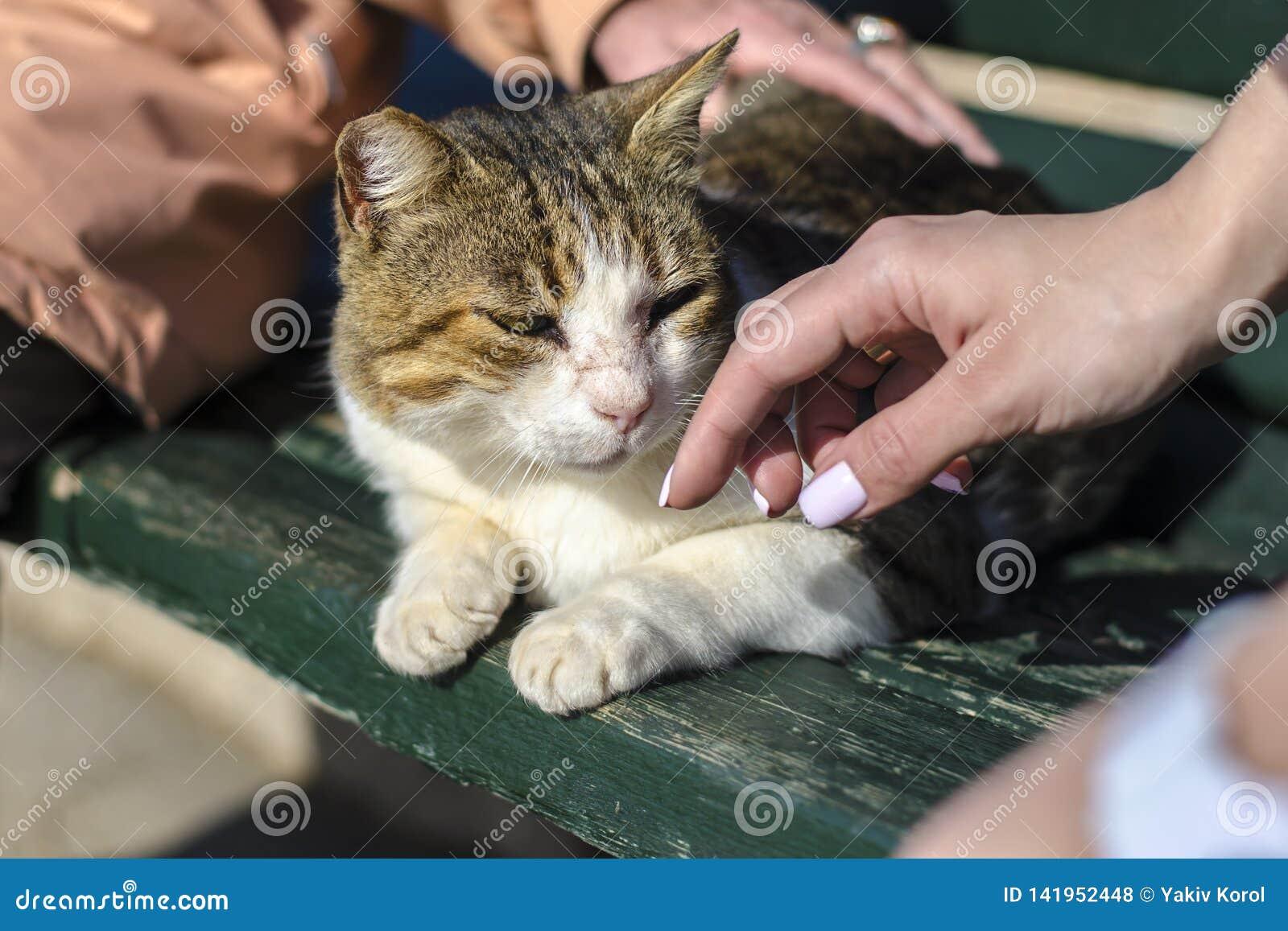 Een geel-witte verdwaalde kat zit op een bank en een bejaarde en een jong meisje met een mooie manicureslag haar