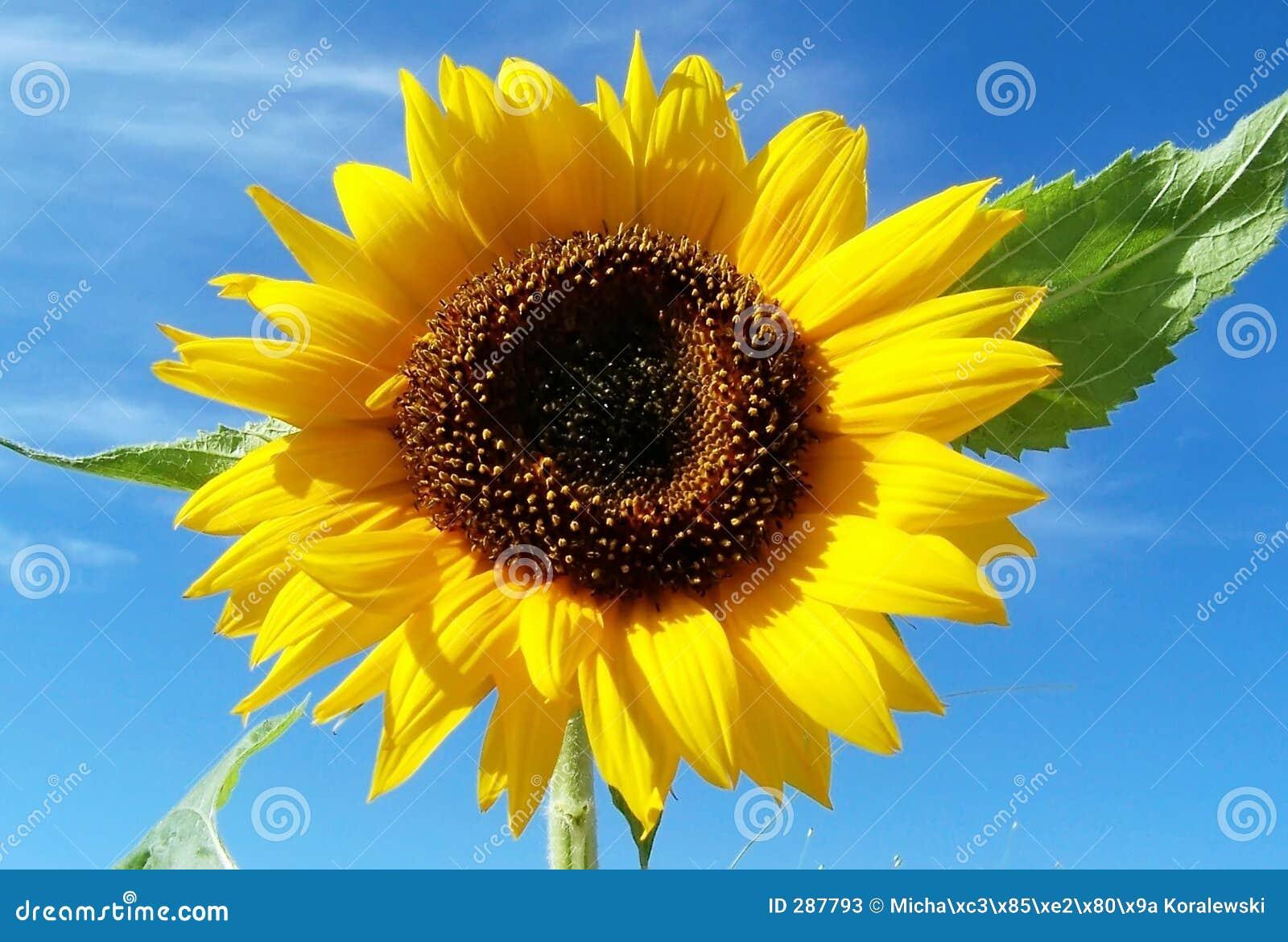 Een gele zon