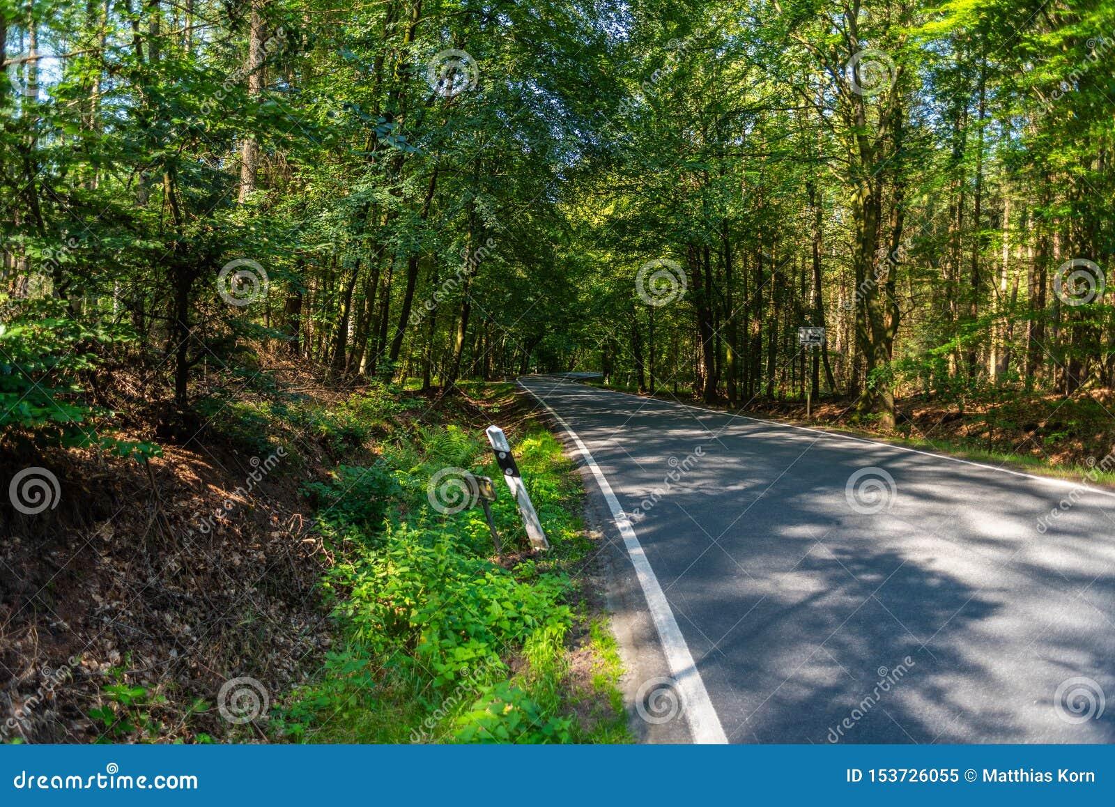 Een gevaarlijke landweg in een bos die van rendier enkel zo in Duitsland storten