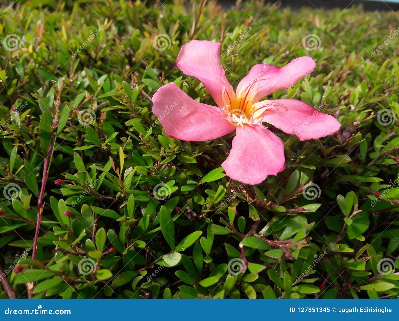 Een gevallen bloem