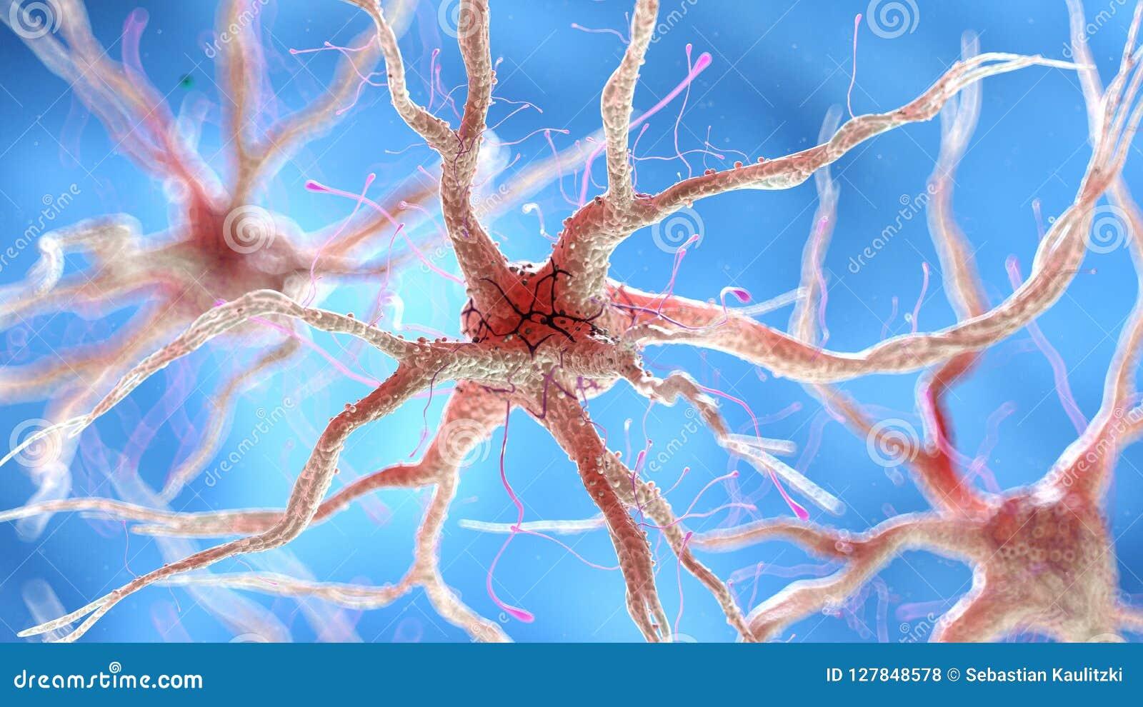 Een gezonde menselijke zenuwachtige cel