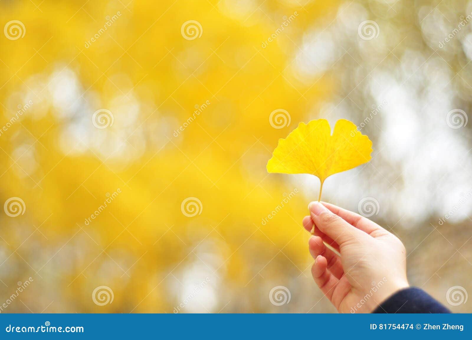 Een gouden ginkgoblad op hand