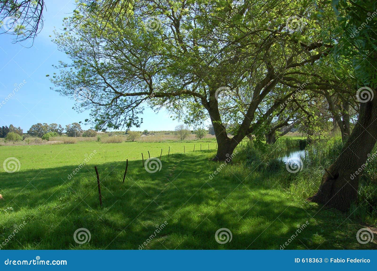 Een groene weg langs de rivier Ciane
