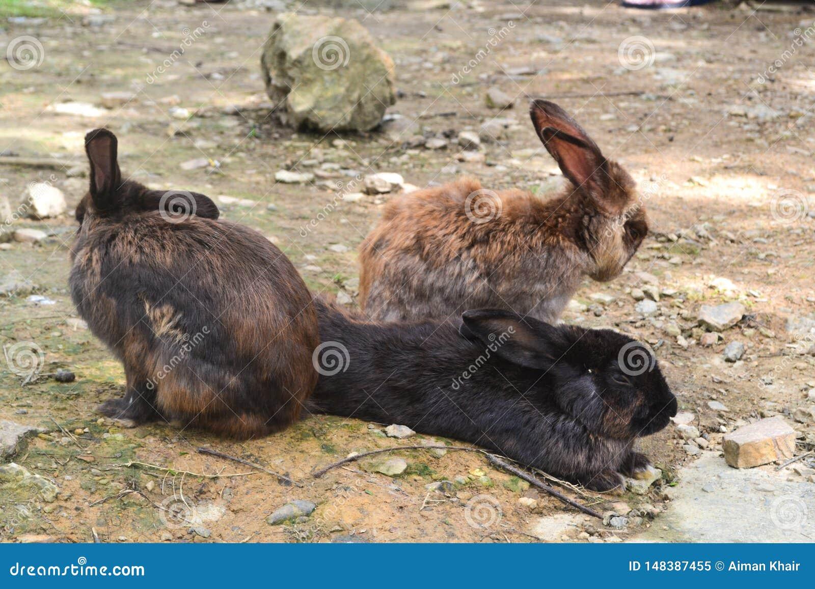 Een groep konijn in de tuin