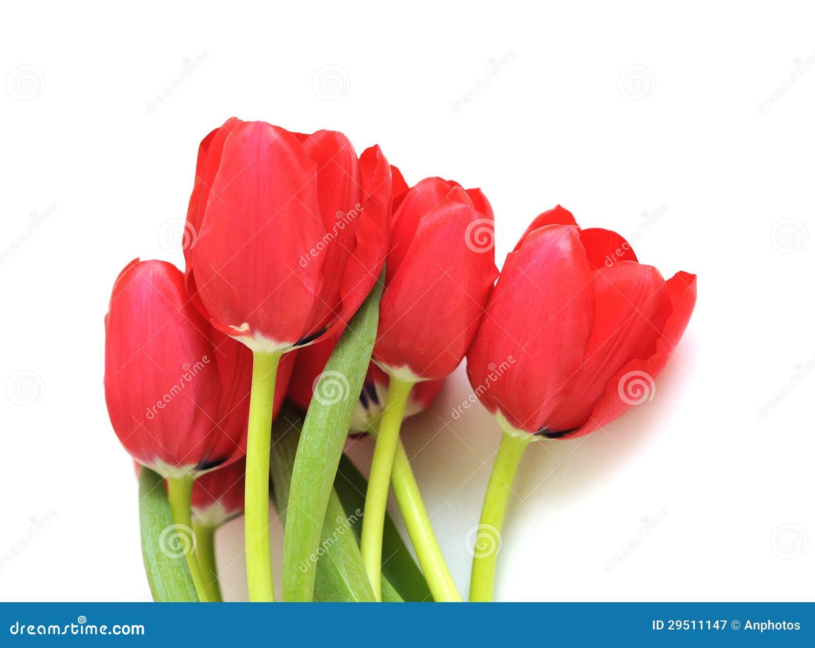 Een groep rode tulp