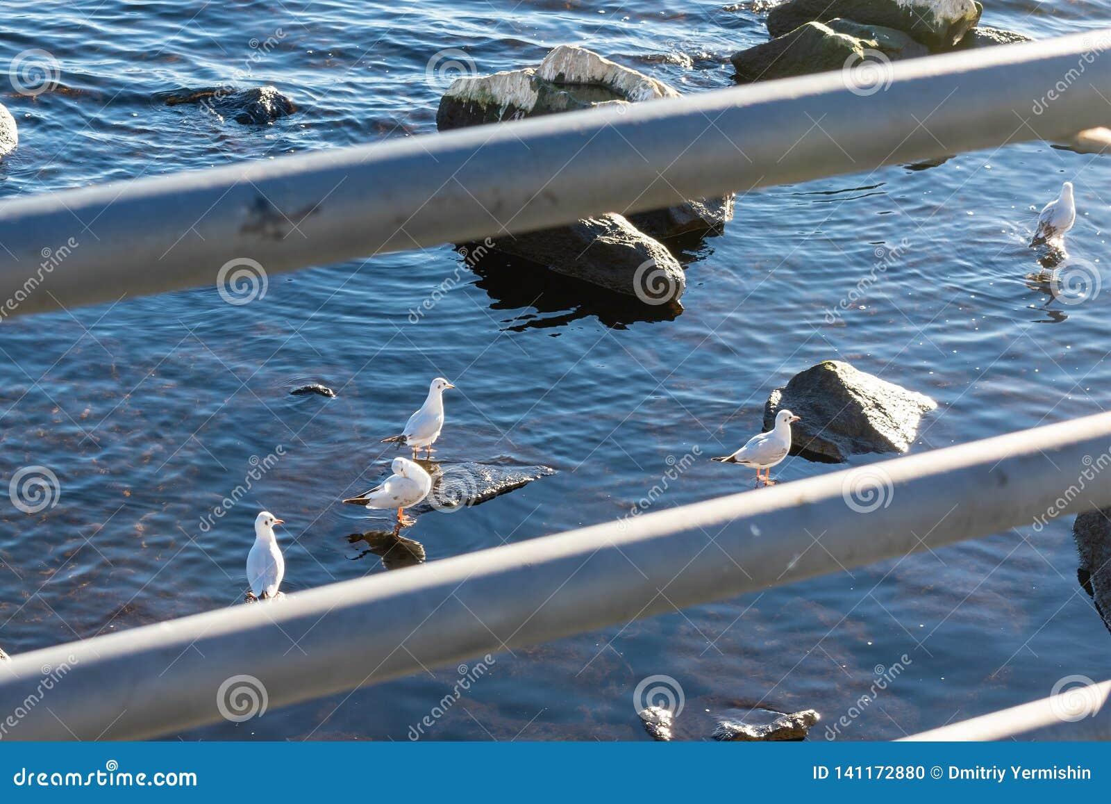 Een groep zeemeeuwen die op stenen in het water zitten en in de zon zonnebaden