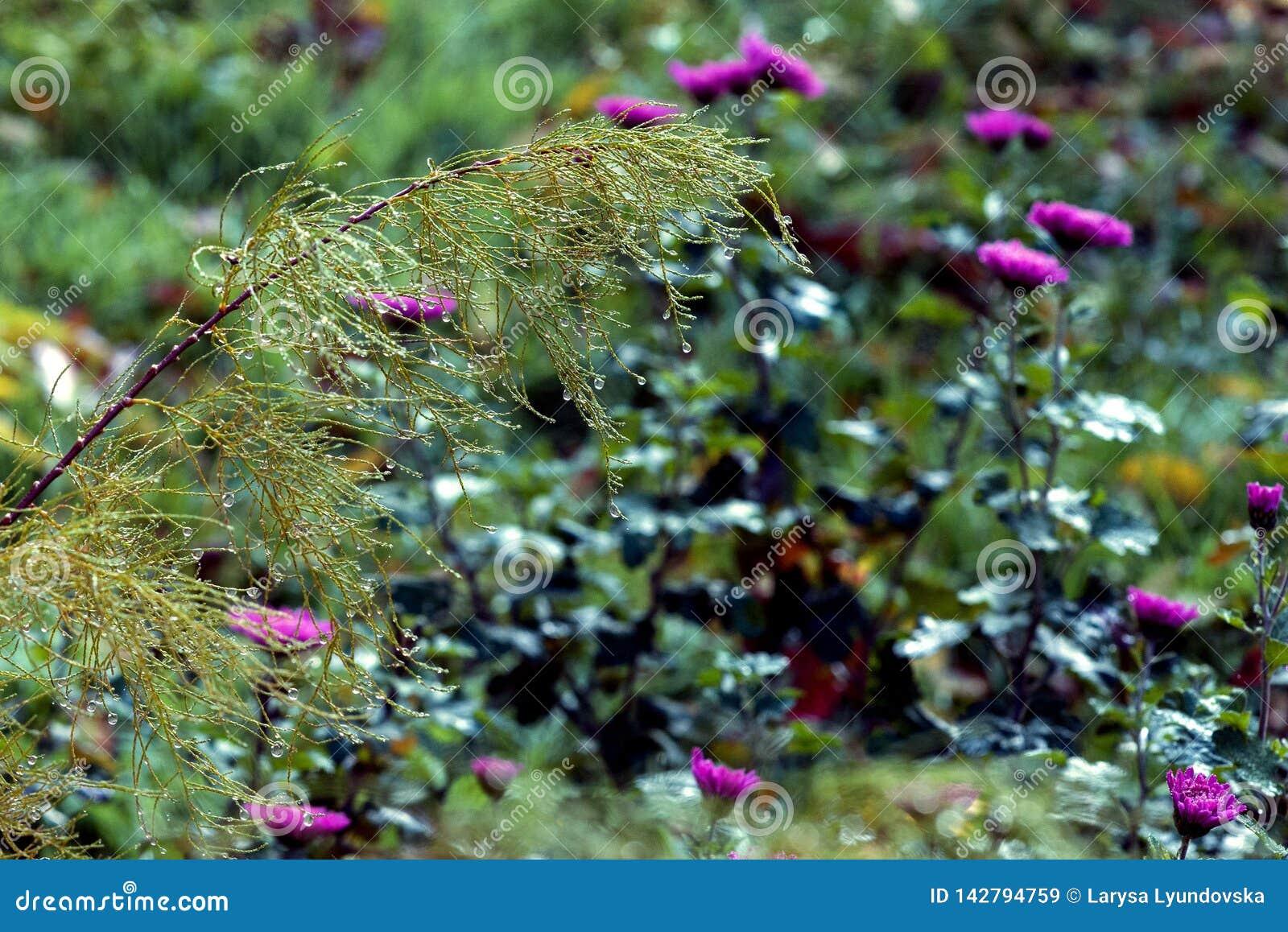 Een grote daling van water op de bladeren van installaties Verrassend koele ochtend