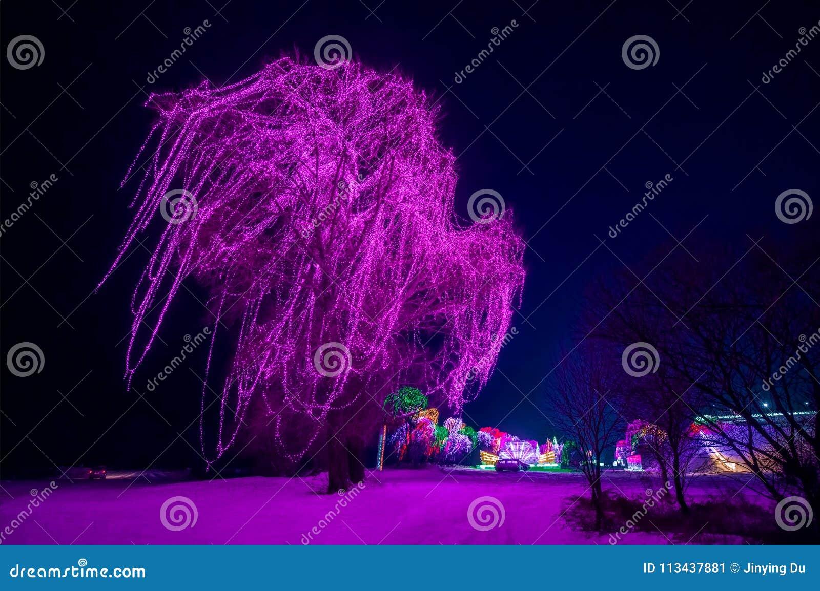 Een grote die boom met purpere lichten wordt verfraaid